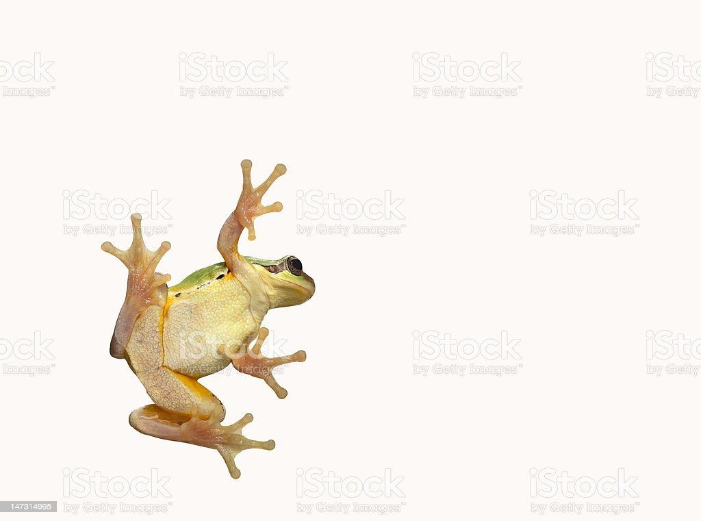 tree frog stock photo