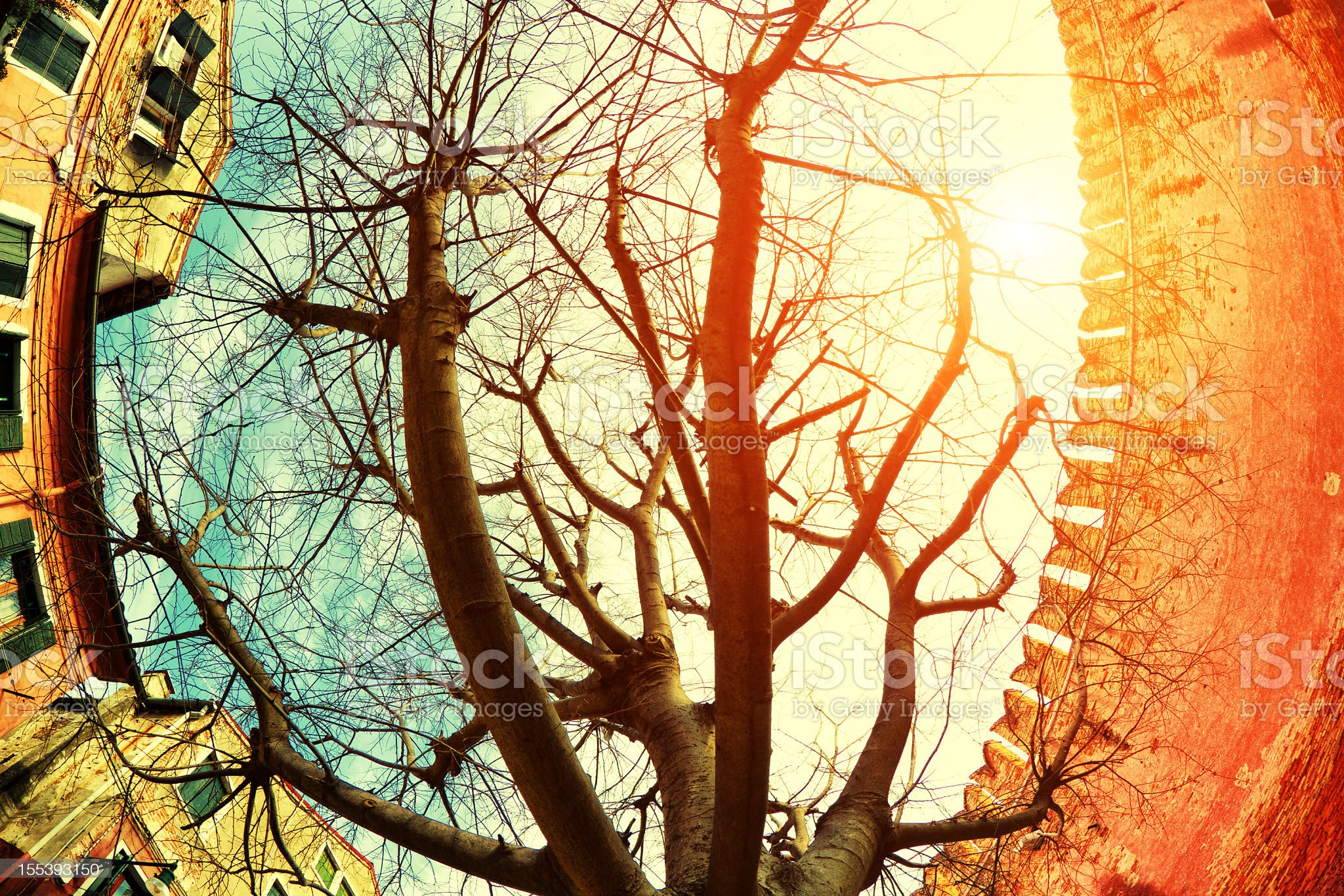 Tree from below in Venice royalty-free stock photo