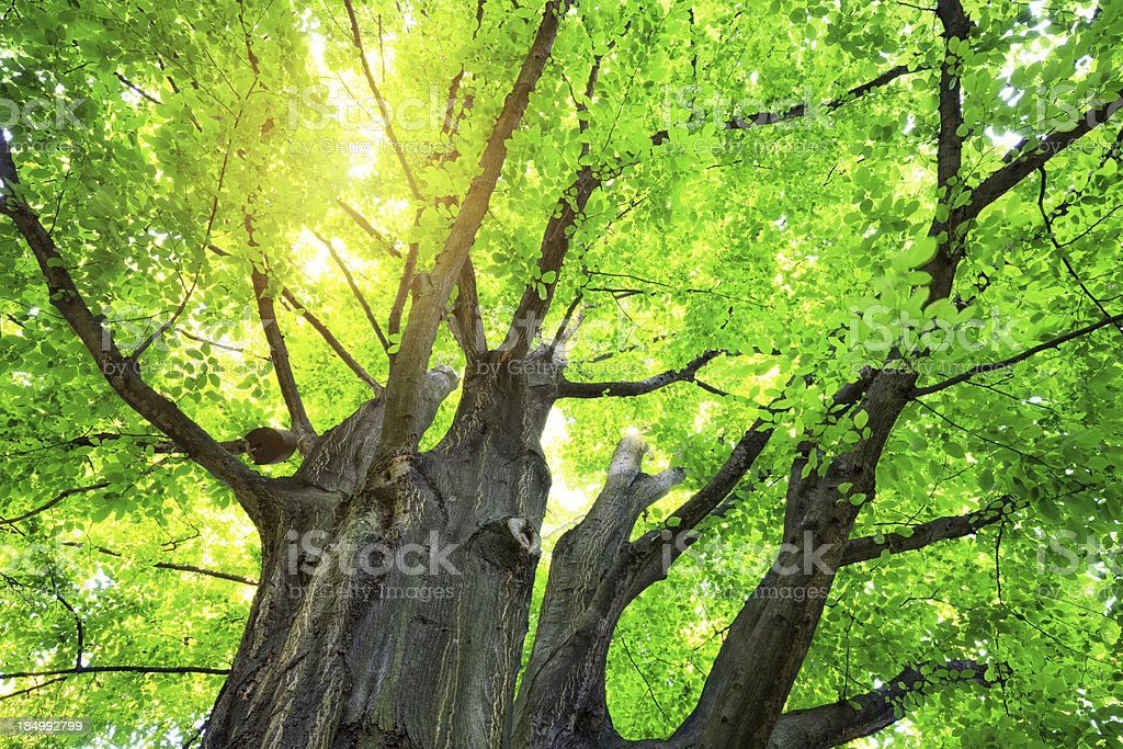 Tree From Below royalty-free stock photo