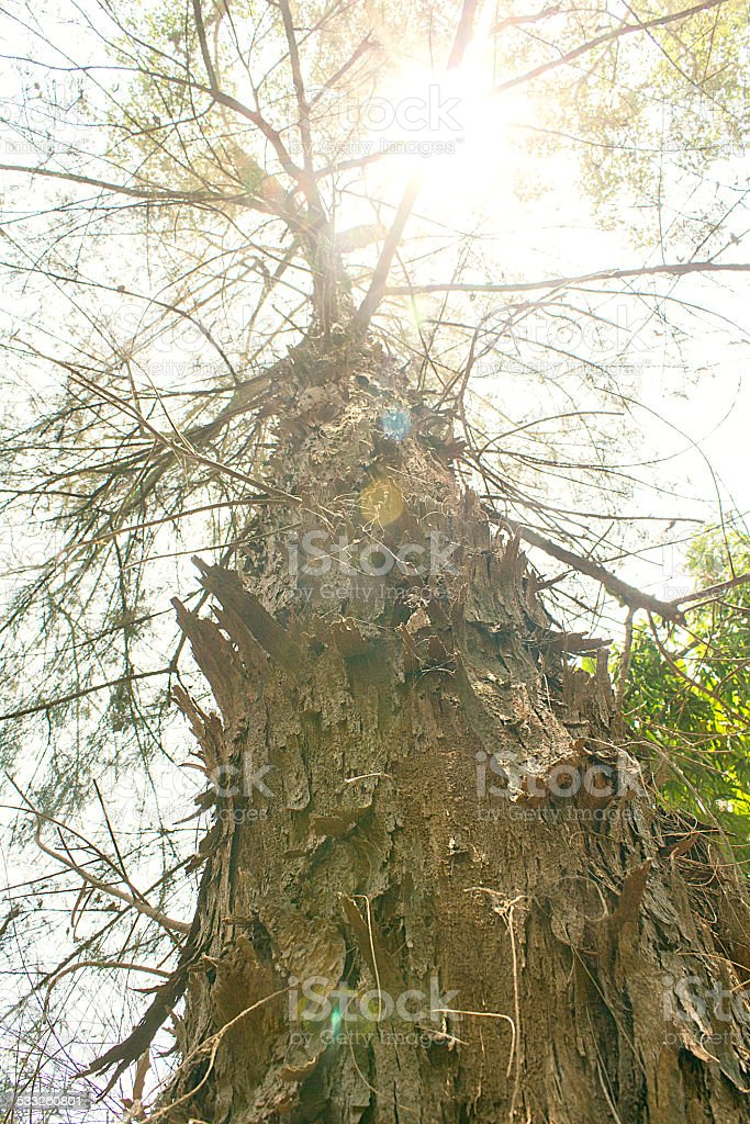 Tree from low angle stock photo