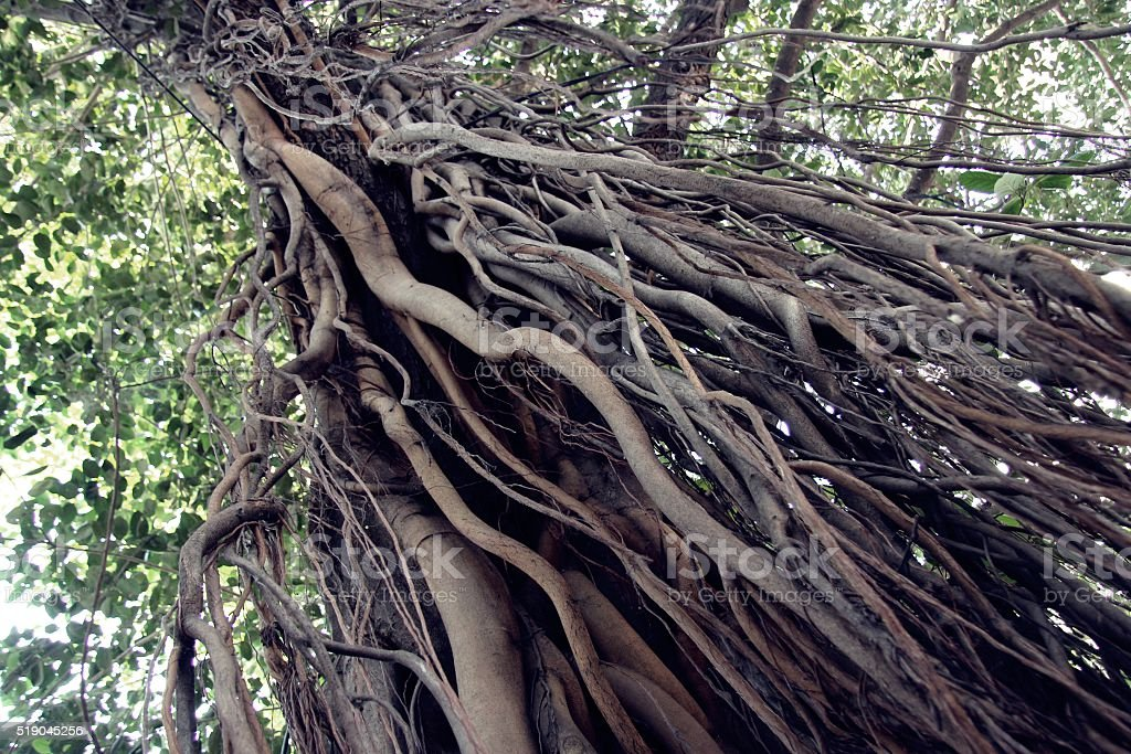 Tree full of life - Mumbai, India. stock photo