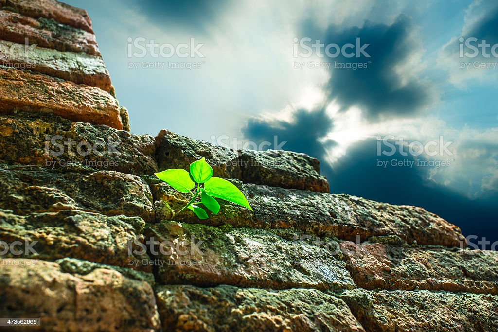 Tree glowing on the grunge wall - Rain cloud royalty-free stock photo