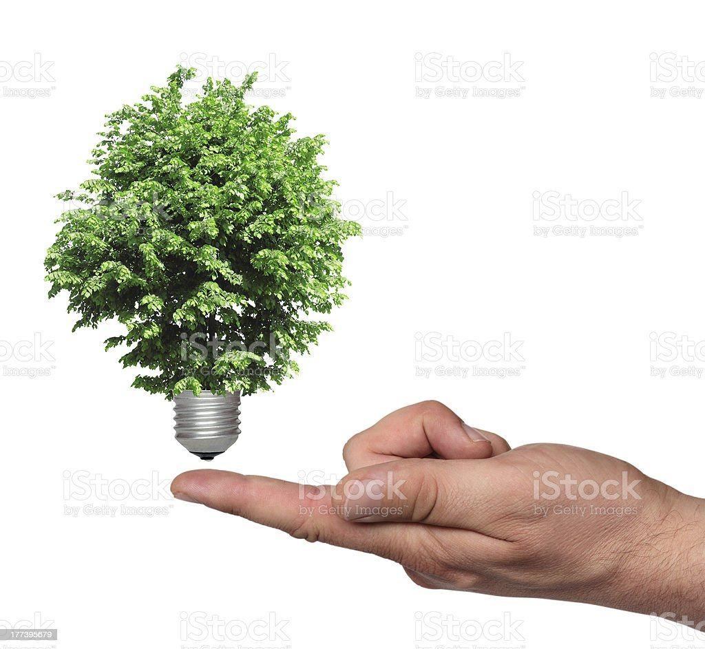 tree growing from base of the light bulb royalty-free stock photo
