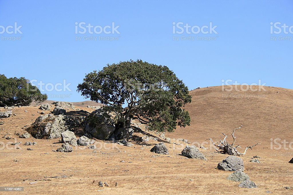 Tree Growing from Rock royalty-free stock photo