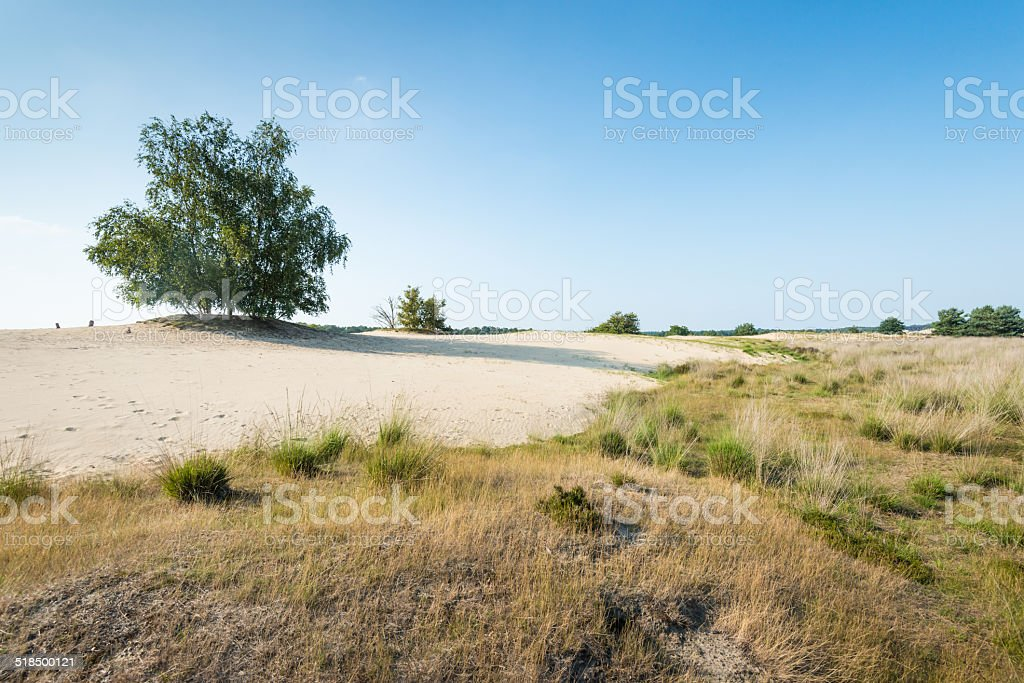 Tree growing in a dry sandy nature area stock photo