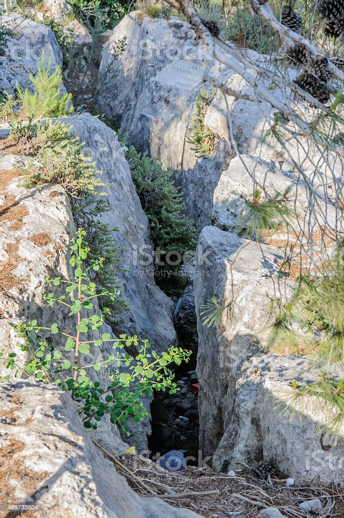 Tree growing in a rock crevice stock photo