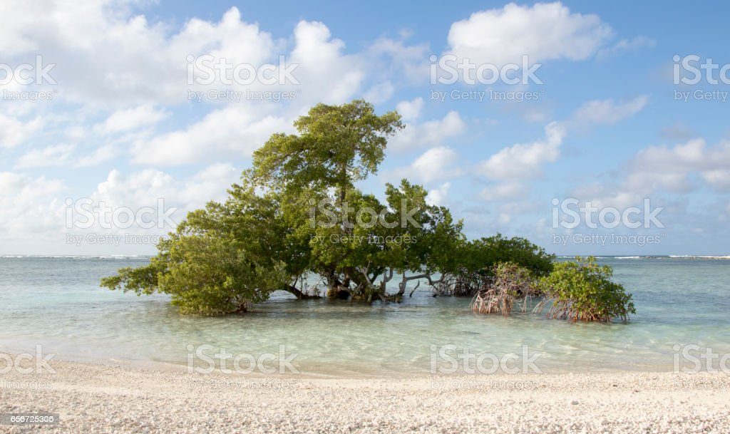 tree growing in the ocean against all odds stock photo