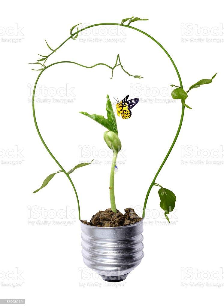 tree growing inside the light bulb stock photo