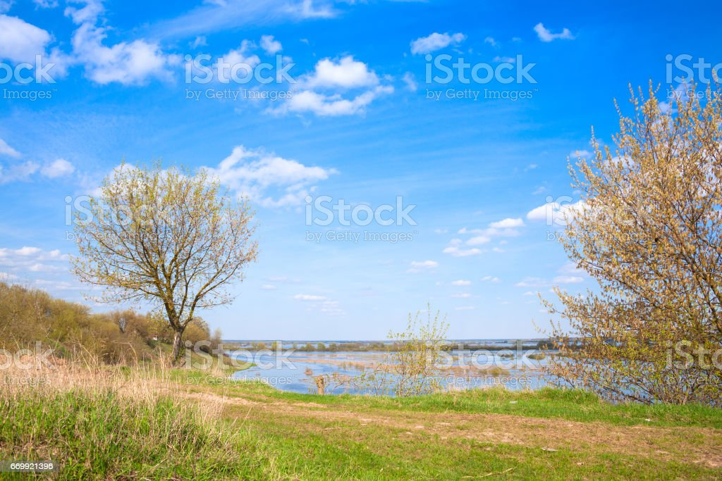 A tree growing on a hill stock photo