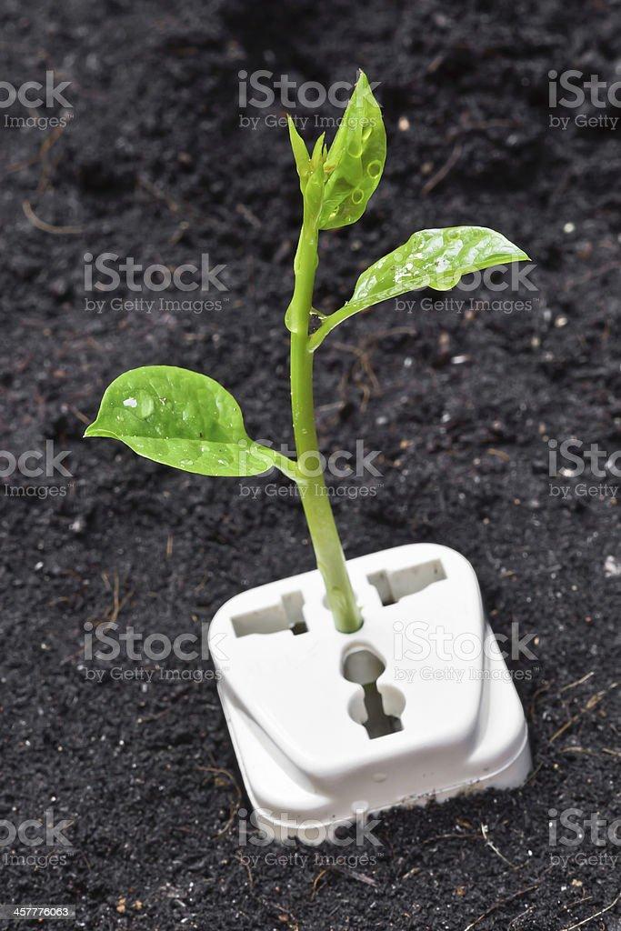 tree growing on a socket stock photo
