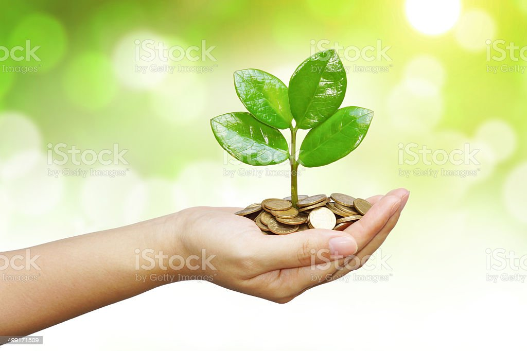 tree growing on coins royalty-free stock photo