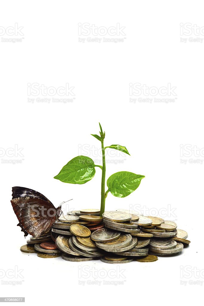 tree growing on coins with butterfly royalty-free stock photo