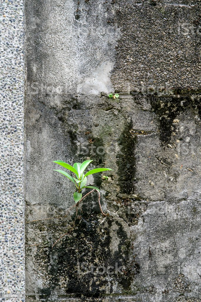 Tree growing on concrete wall stock photo
