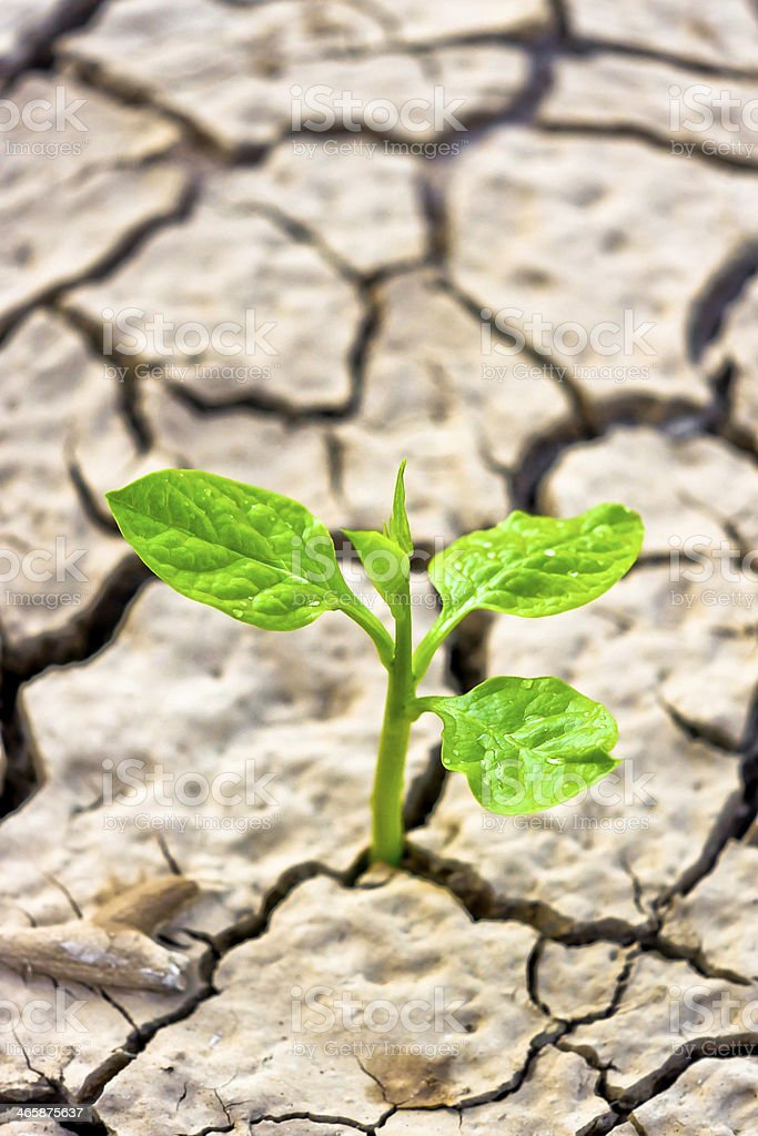 tree growing on cracked earth royalty-free stock photo