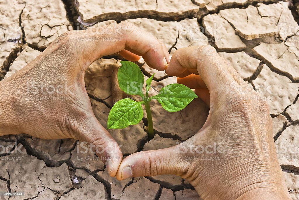 tree growing on cracked ground royalty-free stock photo
