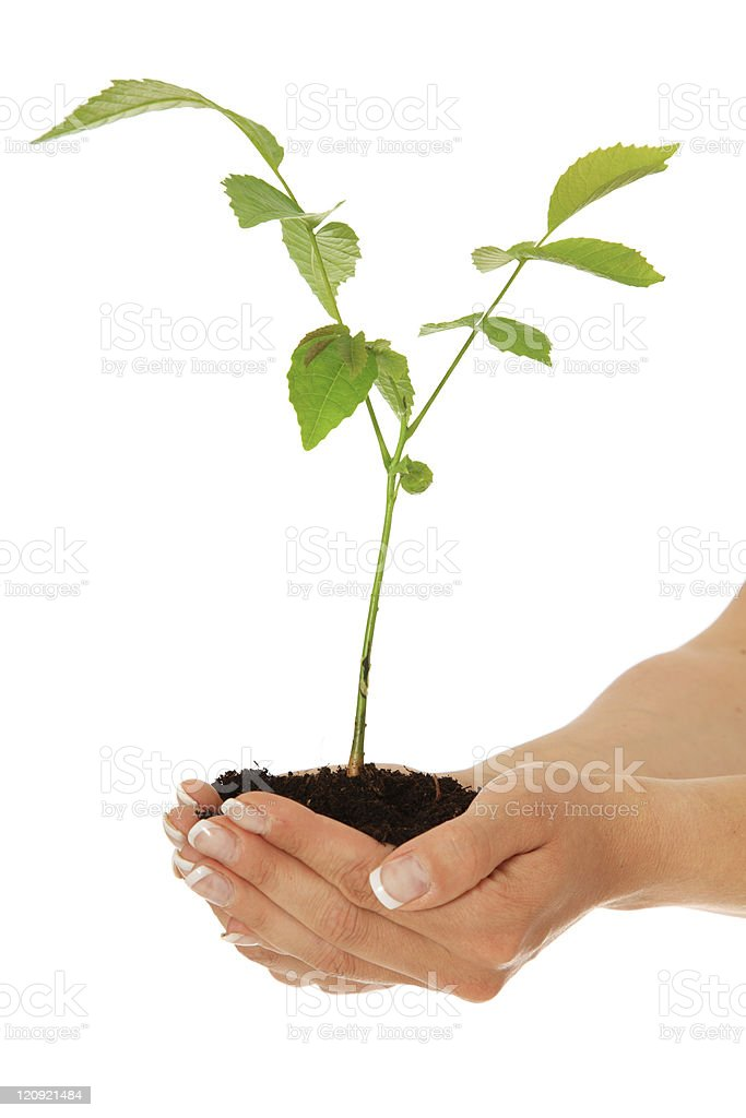 Tree growing on human hands royalty-free stock photo