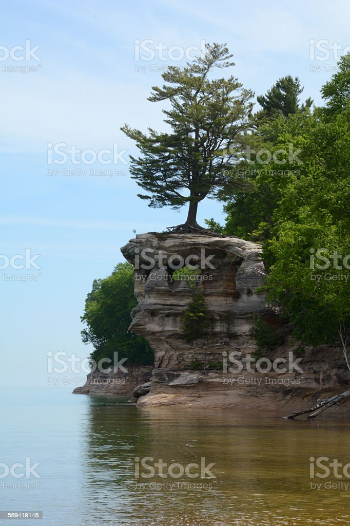 Tree Growing Out of a Rock on the Water royalty-free stock photo