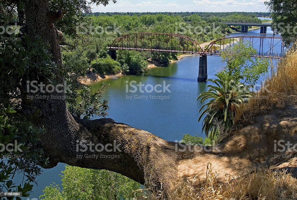 Tree growing over the river stock photo