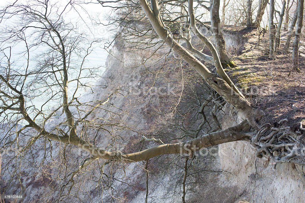 Tree hanging off a cliff stock photo