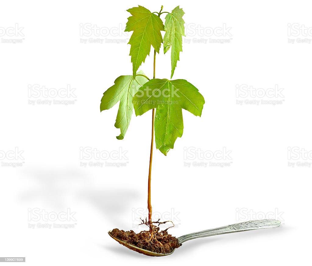 tree health isolated royalty-free stock photo