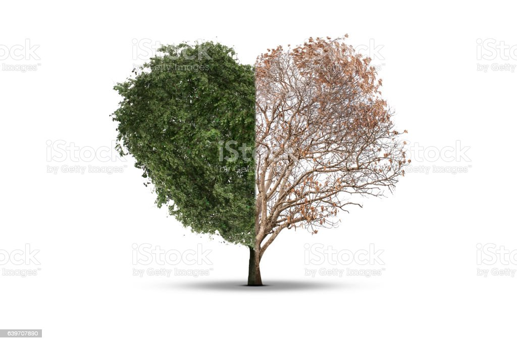 Tree heart death in half isolated on a white background stock photo