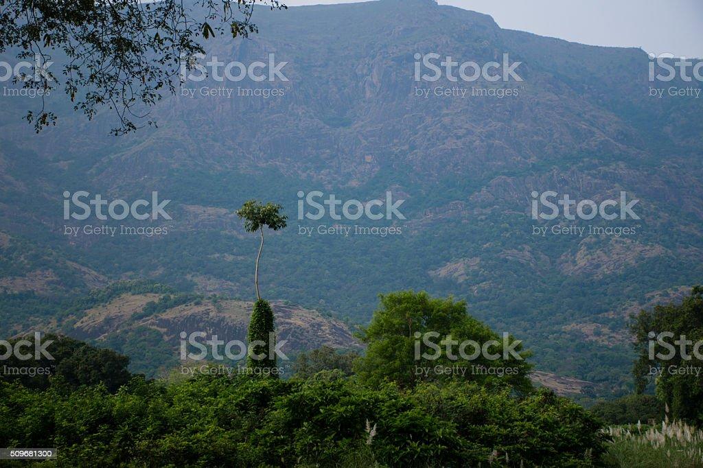 Tree Height stock photo