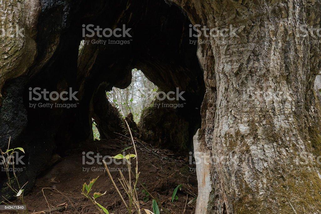 Tree holes stock photo