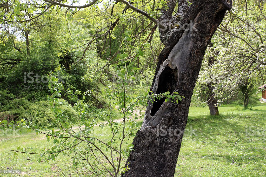 Tree hollow stock photo