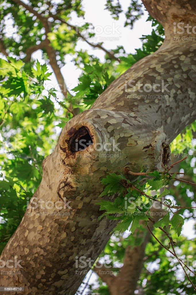 tree hollow stock photo