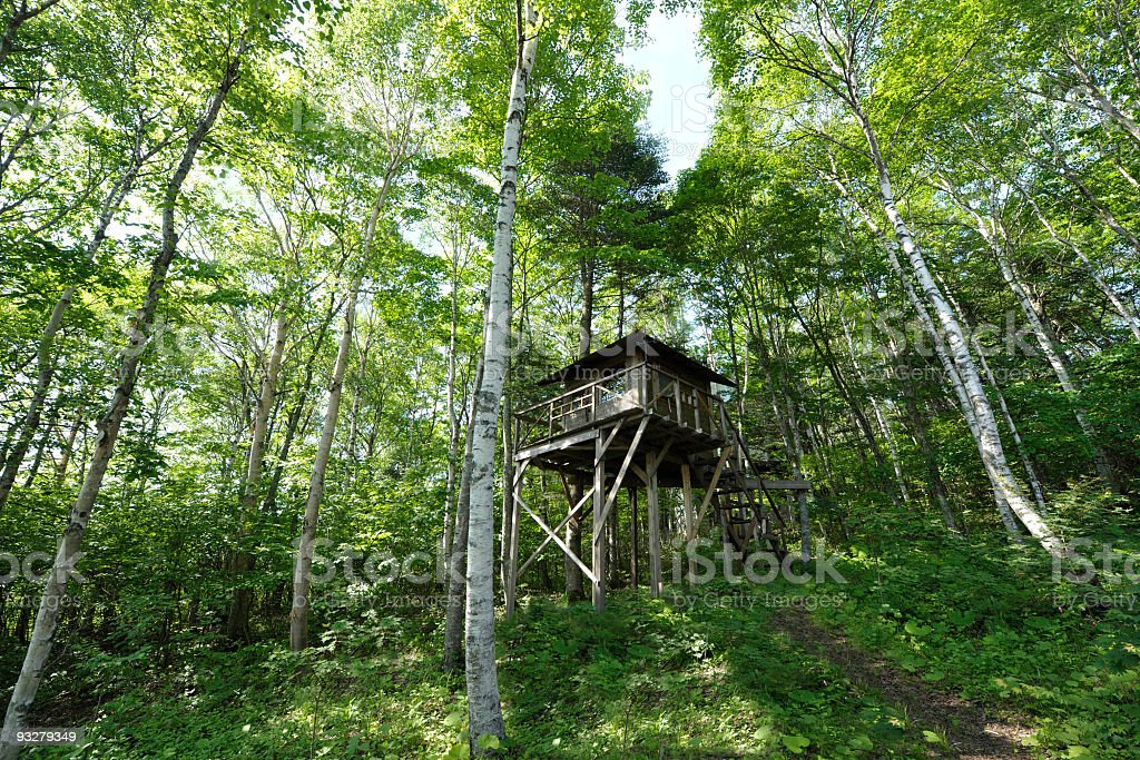 Tree house deep in a lush green birch forest stock photo