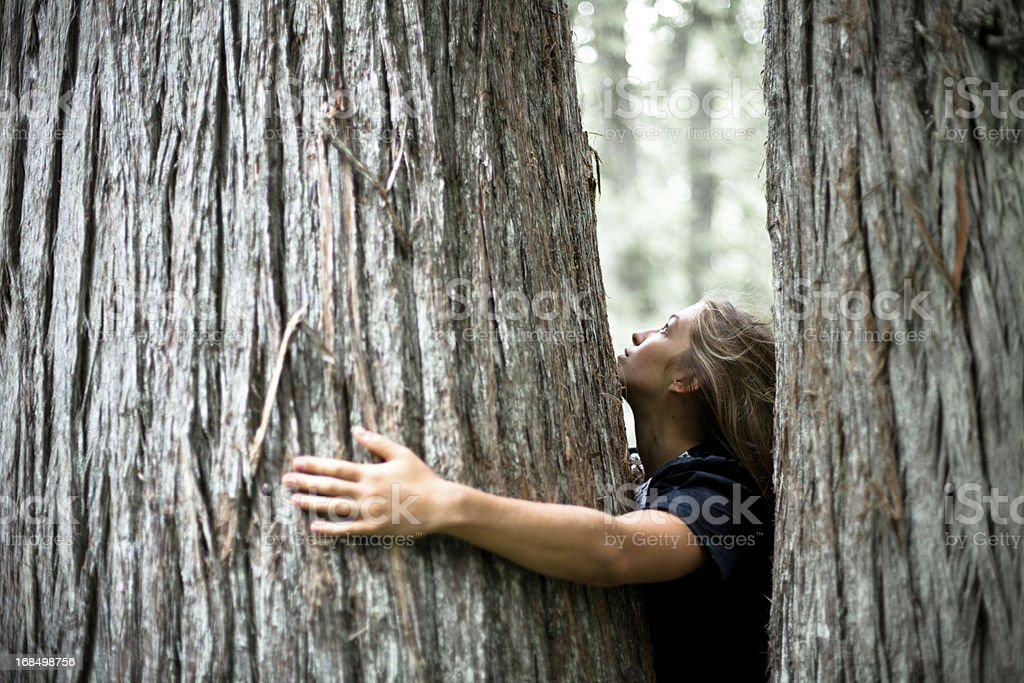 Tree Hugger: Beautiful young woman hugging an old cedar royalty-free stock photo