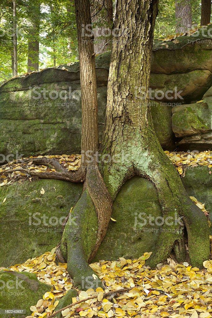 Tree Hugging stock photo