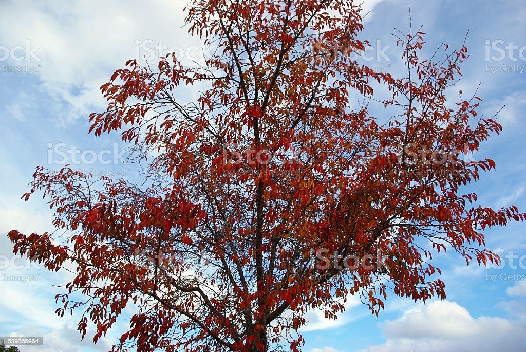 tree II stock photo