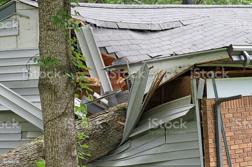 Tree Impales House stock photo