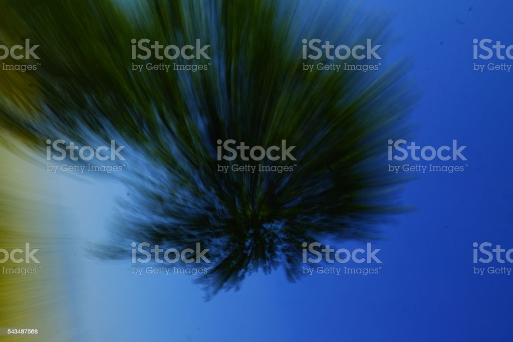 tree impression stock photo