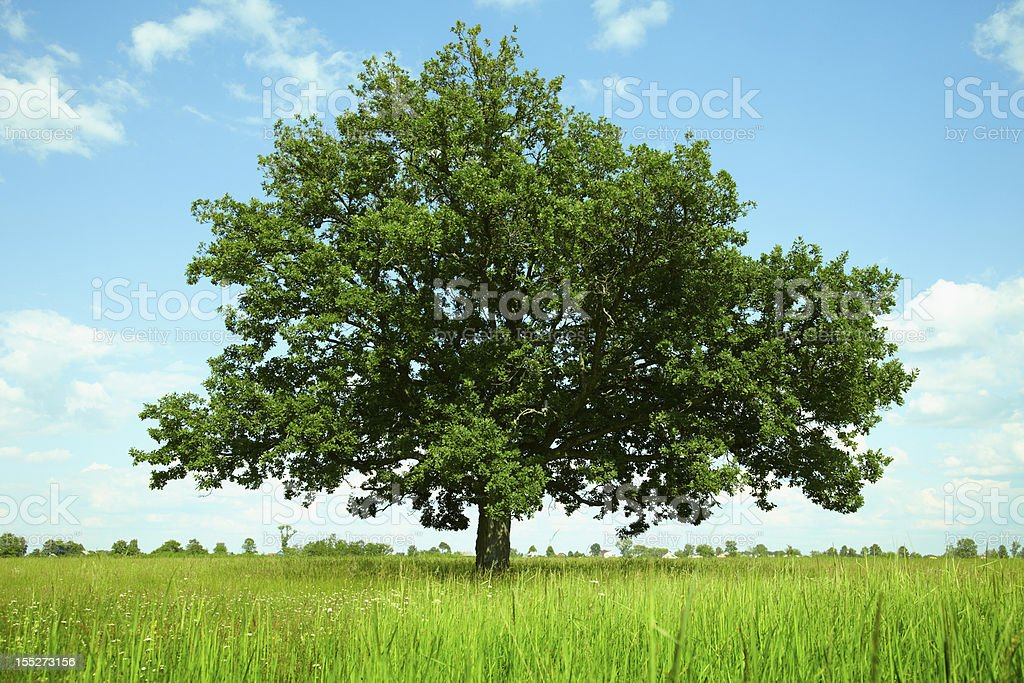Tree in a field stock photo