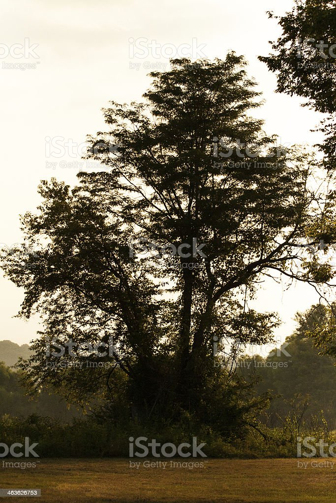 Tree in a Field stock photo