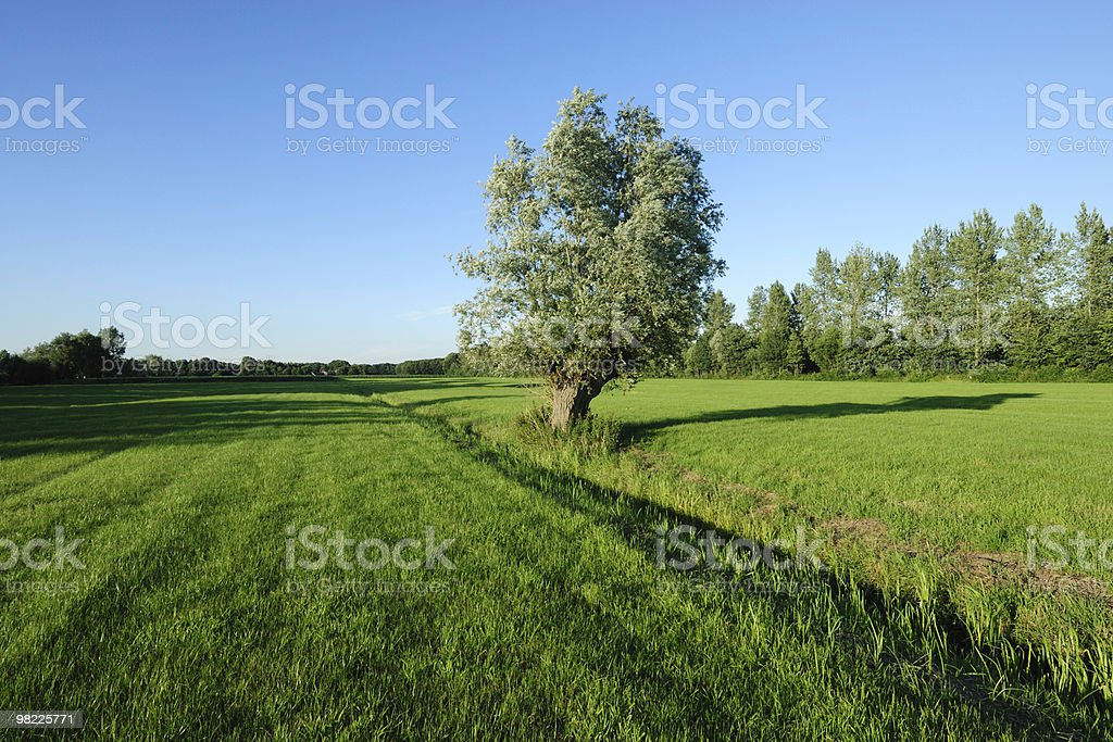 Tree in a field royalty-free stock photo