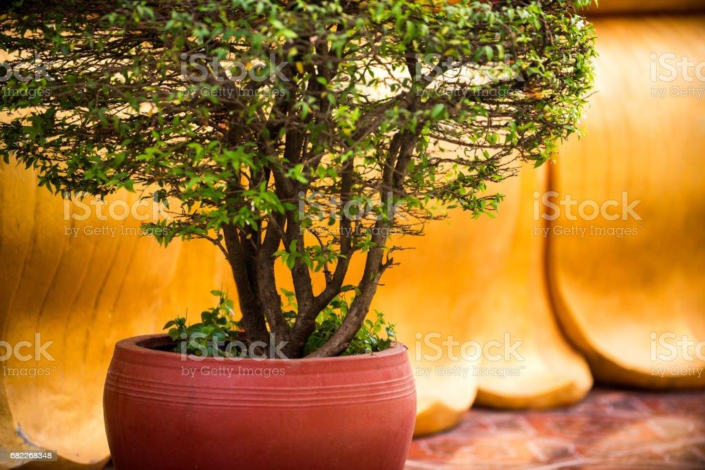 tree in a flower pot, landscape decoration stock photo