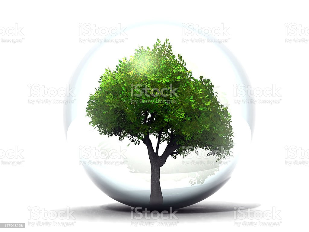 tree in a glass bubble royalty-free stock photo