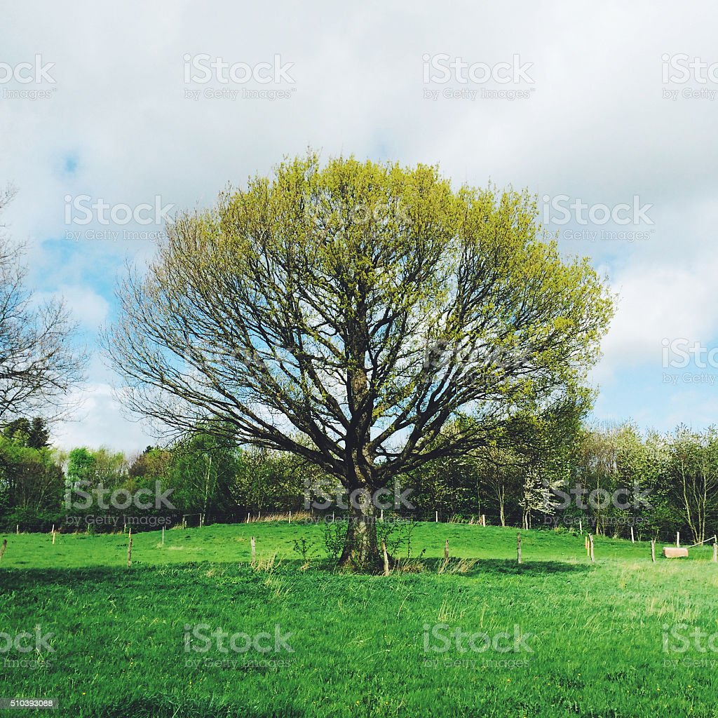 Tree in a green field stock photo