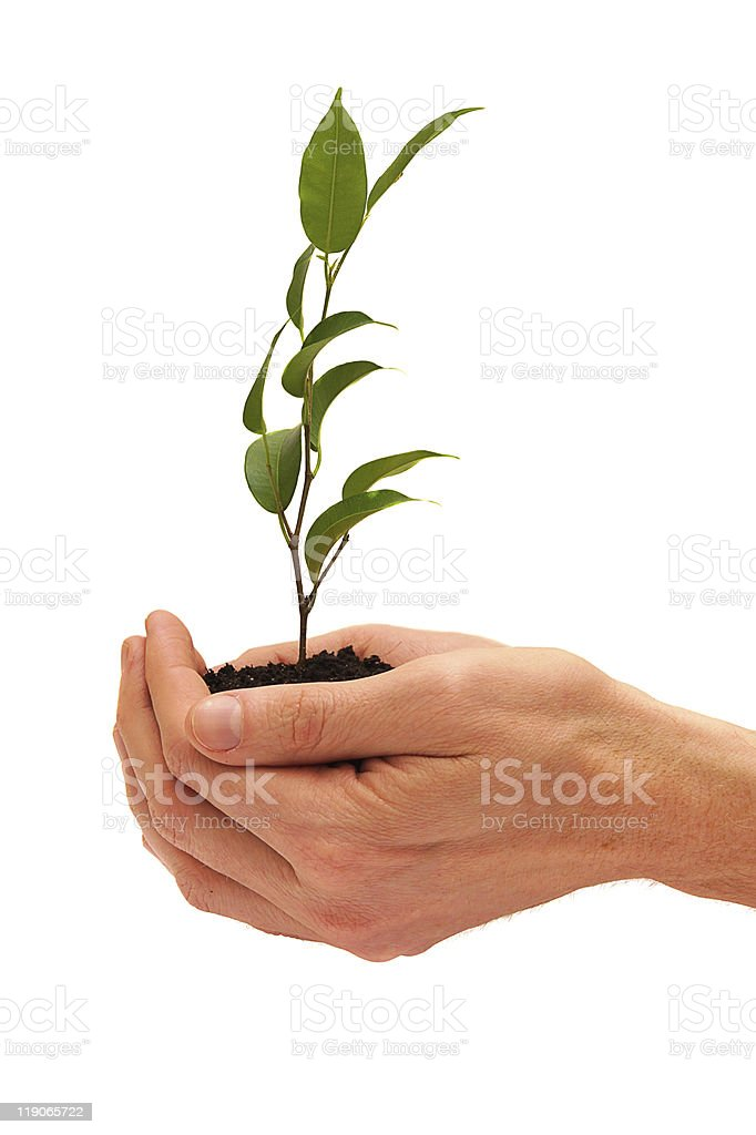 Tree in a male hands isolated on white background royalty-free stock photo