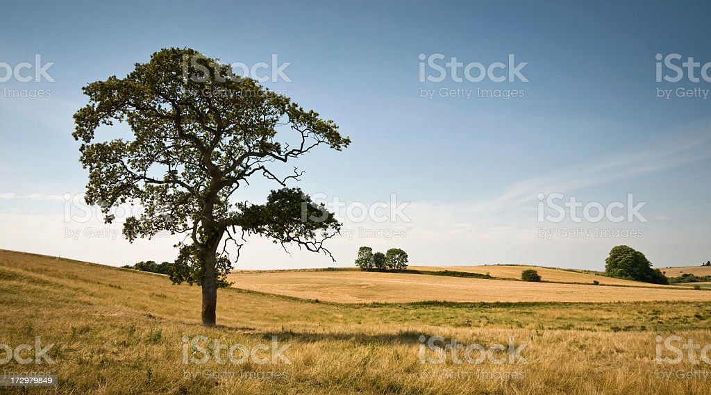 Tree in a meadow 3786 stock photo