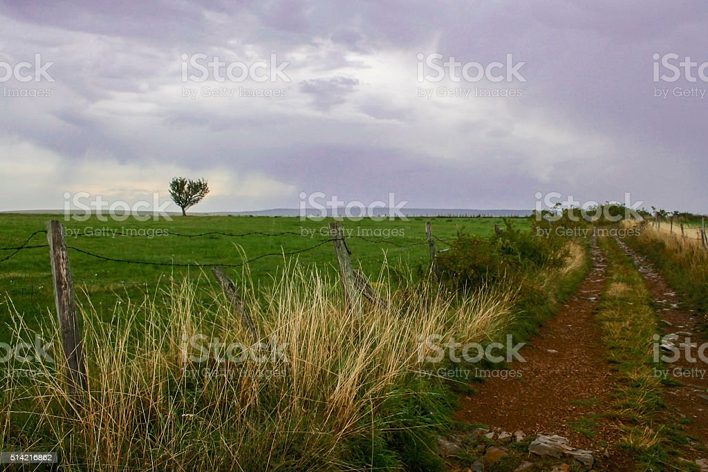 Tree in a meadow stock photo