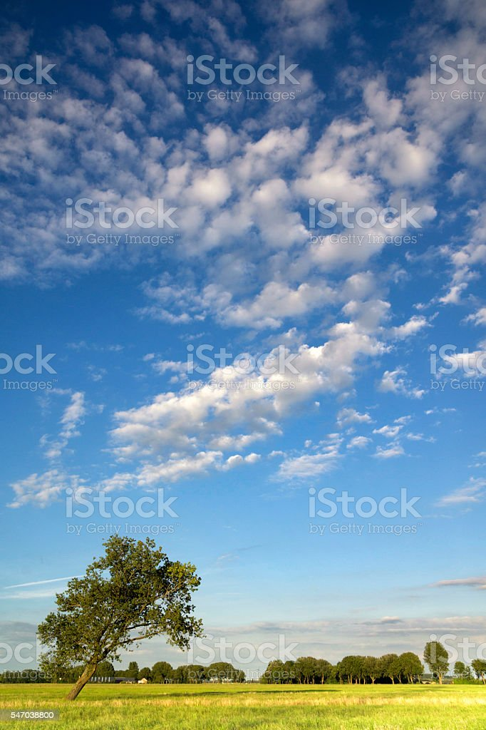 Tree in a pasture stock photo