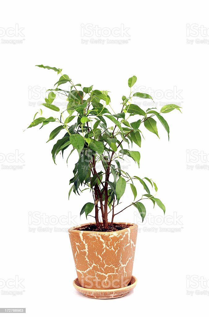 tree in a pot stock photo