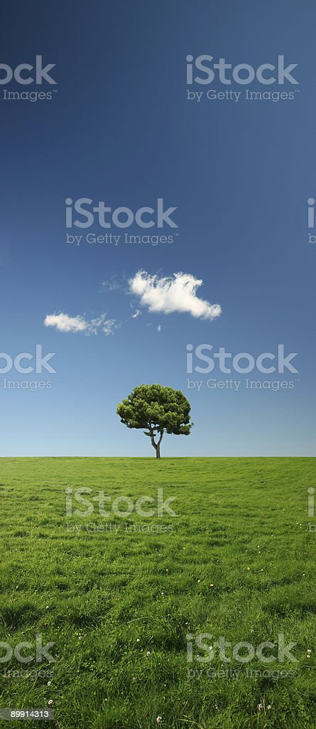 Tree in a vast green meadow - XXL file royalty-free stock photo