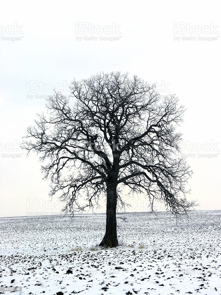 Tree in a winter field 1 royalty-free stock photo