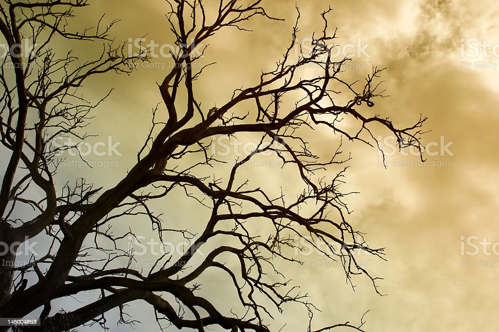 Tree in a Winter storm royalty-free stock photo