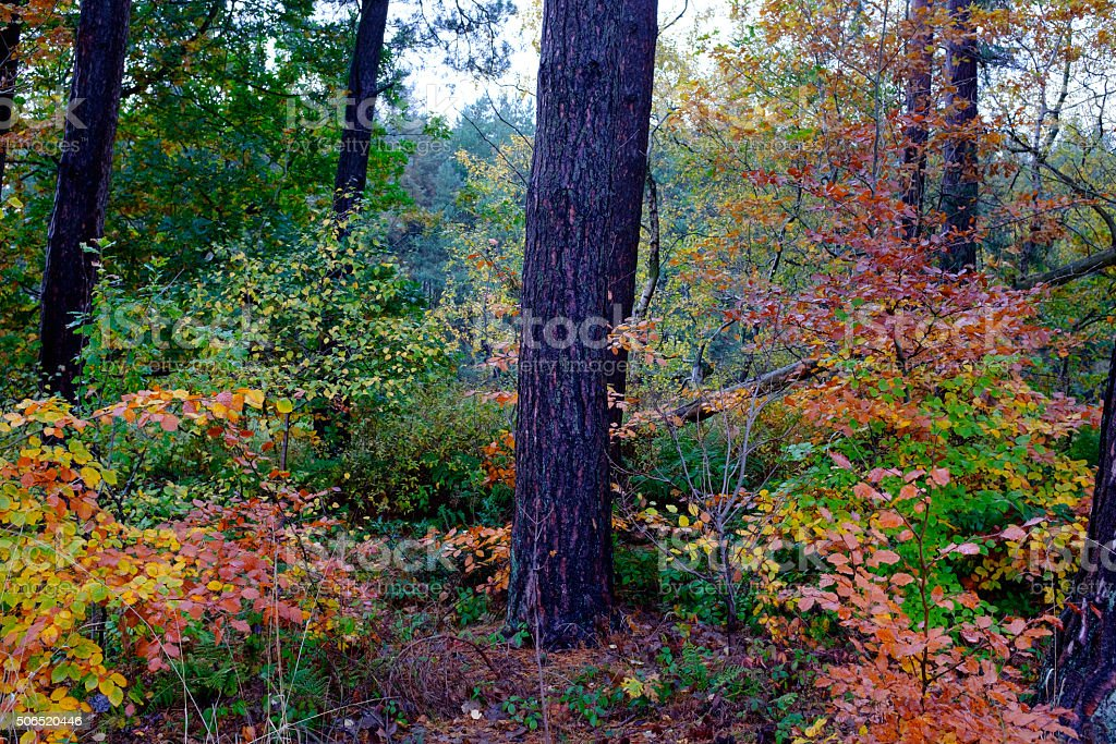 Tree in an autumn wood stock photo